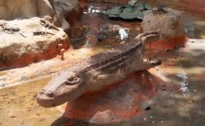 Alligator and Hatchling Pod