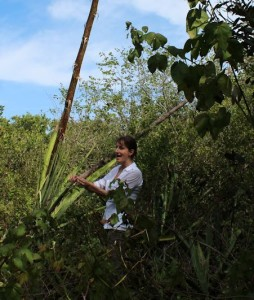 On Mound Key 05 Theresa Dishes on Century Plant B