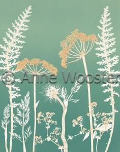 Anne Wooster Pix 04
