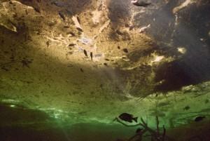 breamatcatfish