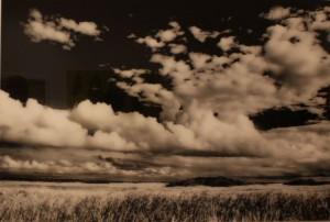 Miccosukee Grass