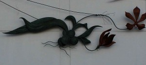 Dollar Orchid