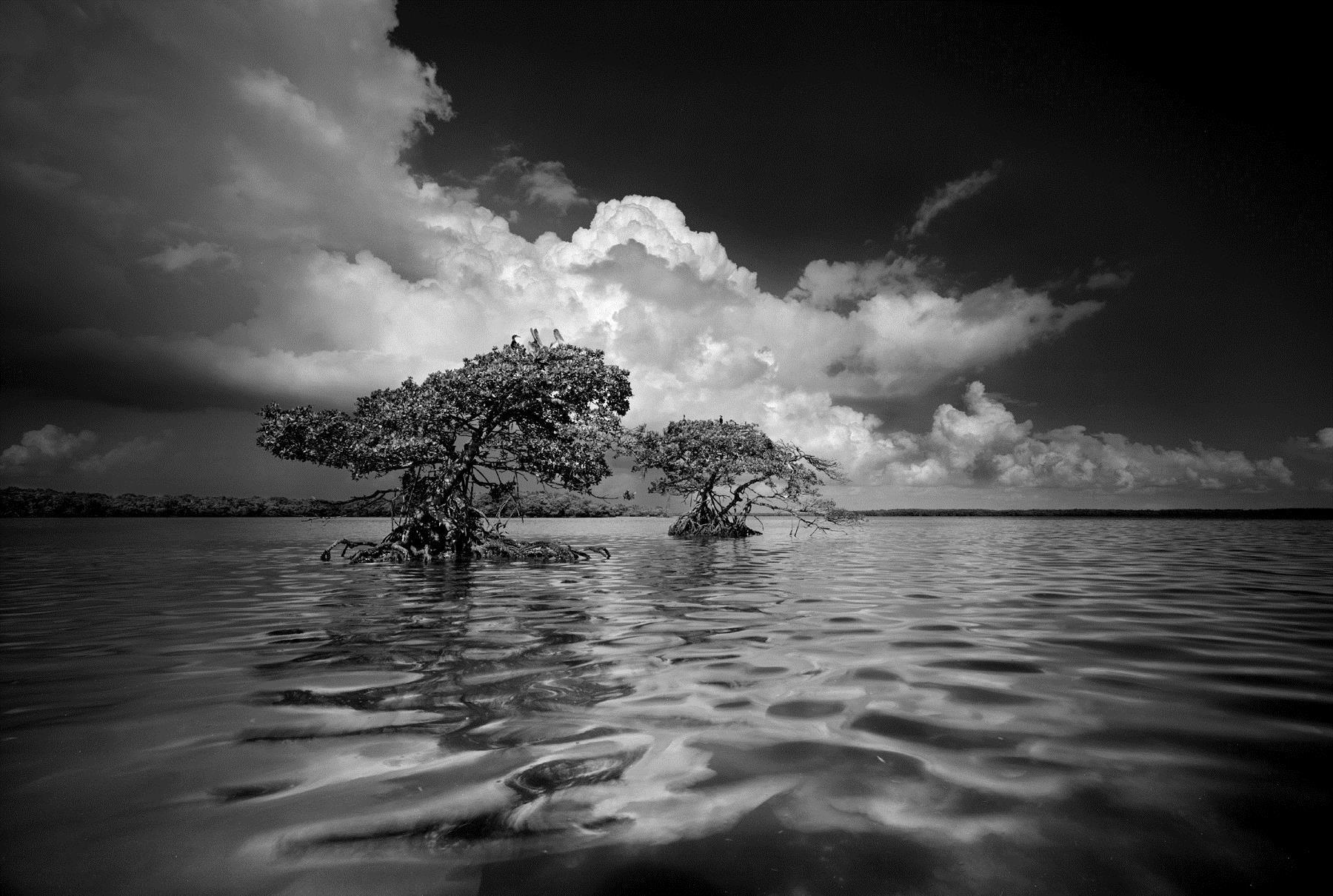 Clyde Butcher Photographs And Prints Artswfl Com