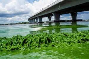Blue Green Algae Blooms 05