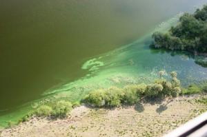 Blue Green Algae Blooms 08