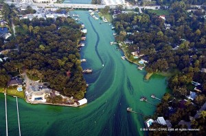Blue Green Algae Blooms 10