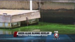 Blue Green Algae Blooms 11