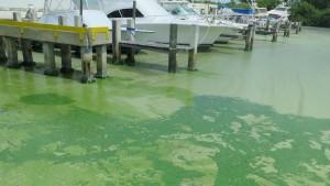 Blue Green Algae Blooms 18